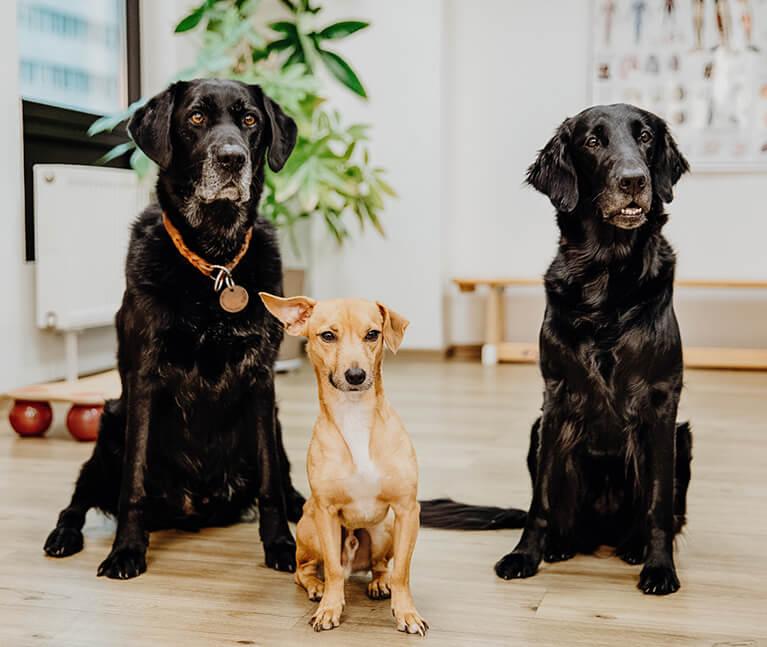 Praxishunde der Praxis für Ergotherapie Köln-Süd